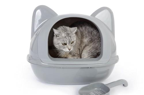 猫耳のついたトイレに入っているグレーの猫