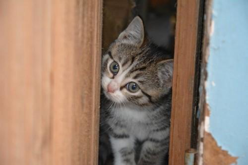 すき間にいる子猫