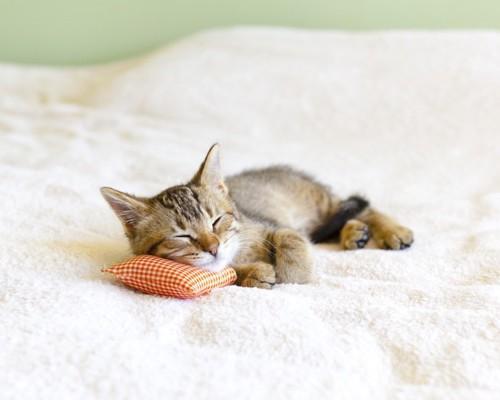 枕を使って眠る子猫の写真