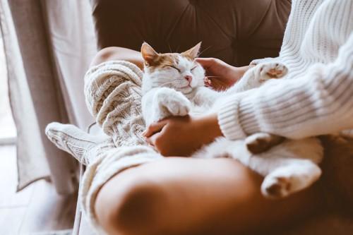 飼い主の膝の上で眠る猫