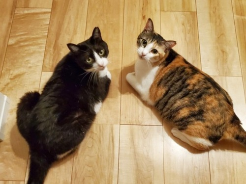 床でのんびり二匹
