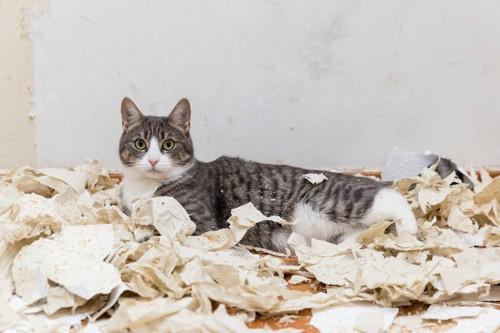 紙を散らかす猫
