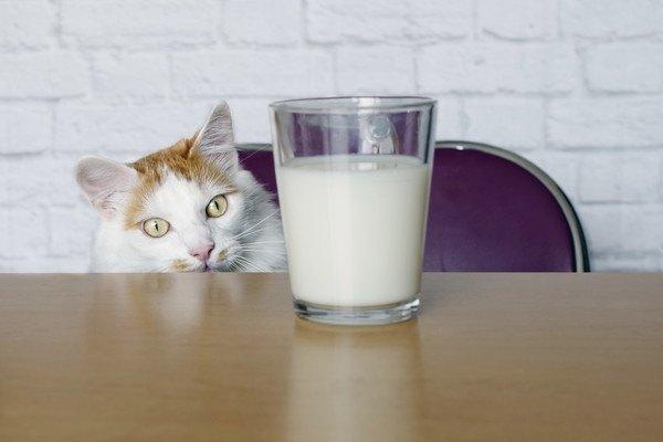 牛乳の入ったグラスを見つめる猫