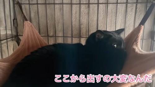 ハンモックにいる黒猫