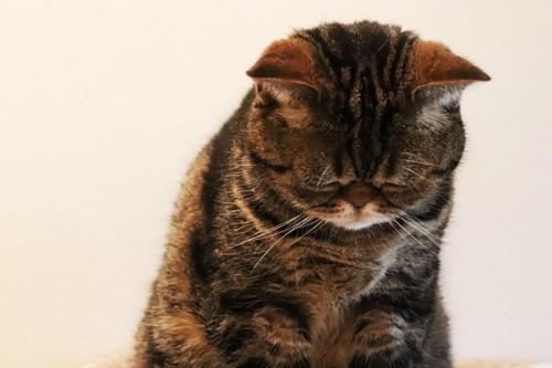 ごめんなさいと下を向く猫