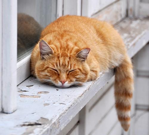 外でくるまる猫