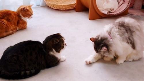 毛づくろいしている猫と見つめる猫