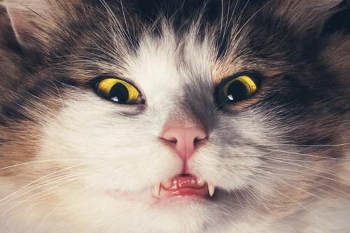 ホラー映画みたいなライティングの猫の顔アップ