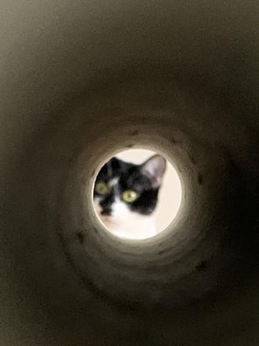 月に住む猫