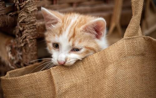 麻のルートートのバックを齧る子猫