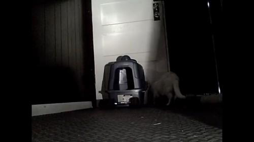 猫トイレを動かそうとする