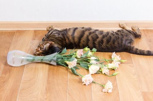 花瓶を倒した猫