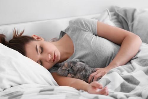 女性と一緒に寝る猫