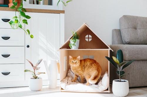 家の形をした寝床に入っている猫