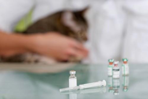 注射器と薬の容器と奥にいる猫