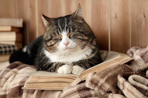 広げた本の上で眠る猫