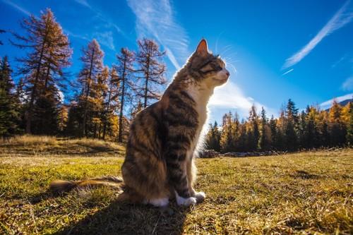 草の上に座る猫