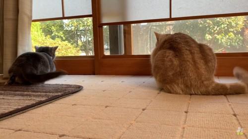 しっぽをゆらゆらさせる猫たち