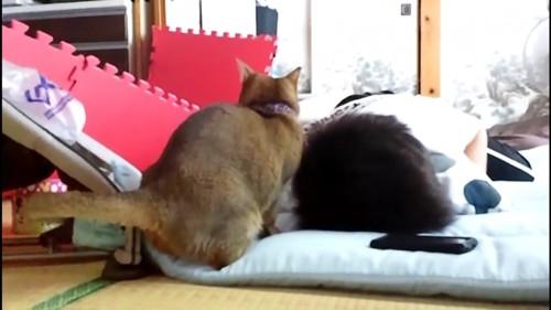 頭を掻いている猫