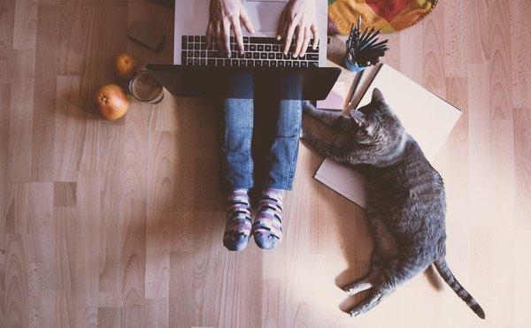 猫と人とPC
