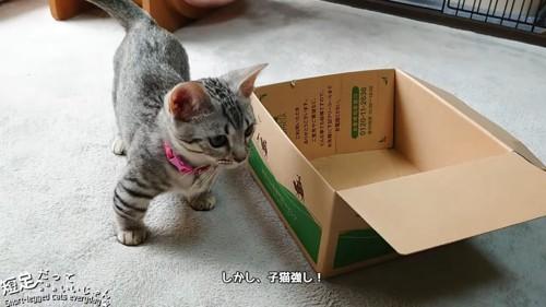 箱の横に立つ子猫