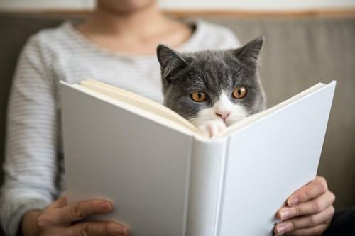 飼い主の読む本の前を陣取る猫