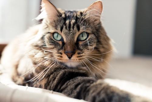 寛ぐ猫イメージ