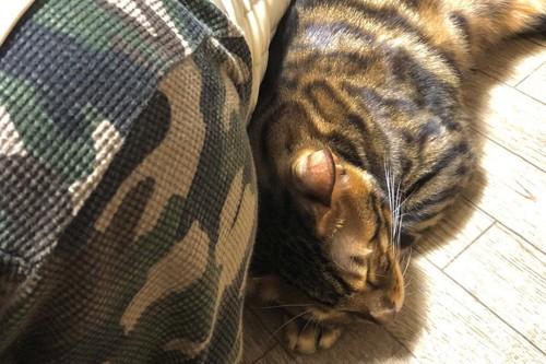 添い寝する猫