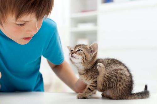 後ろ足で身体を掻いている子猫を見つめる男の子