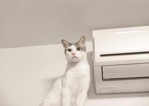 エアコンの隣にいる猫