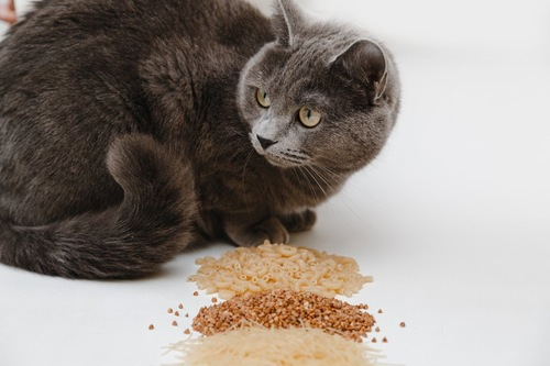 ご飯を前にしている猫