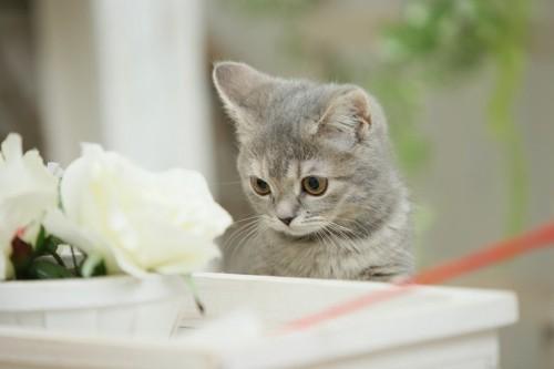 花を見る子猫