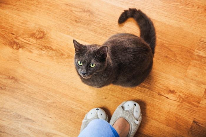 足元で見あげる猫