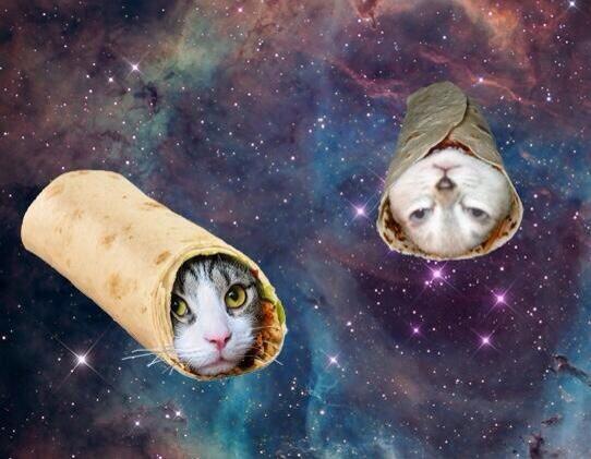 春巻き猫星人