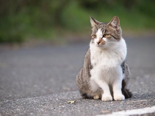 道ばたで佇んでいる猫
