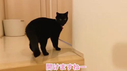 ドアの前に立つ黒猫