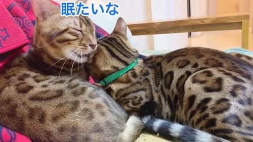 耳をくわえたまま目を閉じる猫