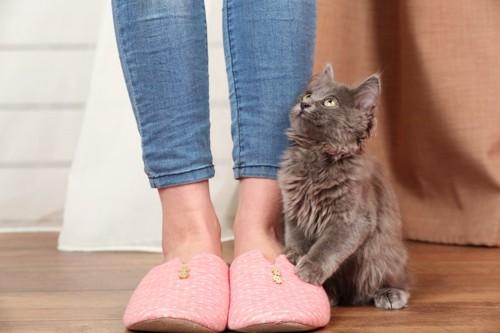 飼い主の足元に座って見上げる子猫