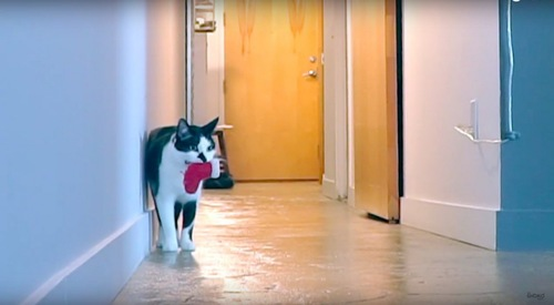 寂しげに鳴く猫
