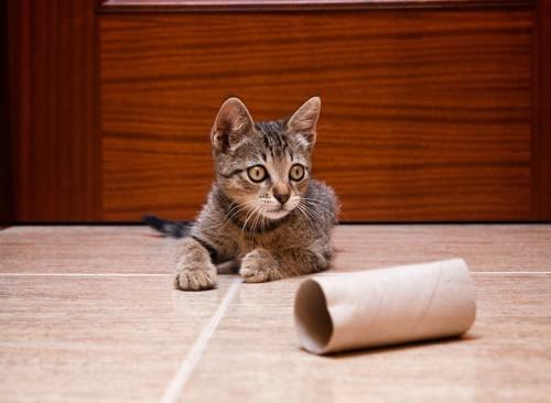 トイレットペーパーの芯で遊ぶ子猫