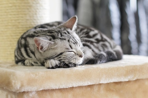キャットタワーの上で眠る猫