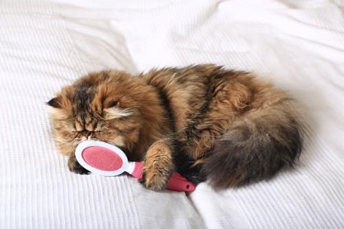 ブラシを握ってニオイをかぐ茶猫