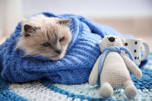 青いセーターにくるまっている猫と熊のあみぐるみ