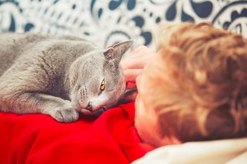 寝ている飼い主の胸に顔をつけて甘える猫