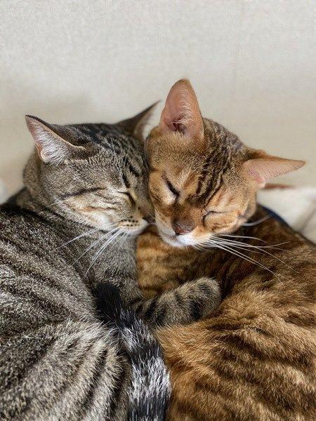 くっついて暖を取る猫