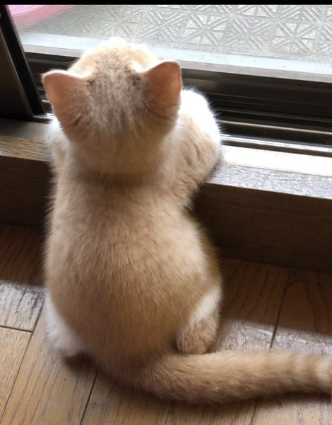 子猫の後頭部