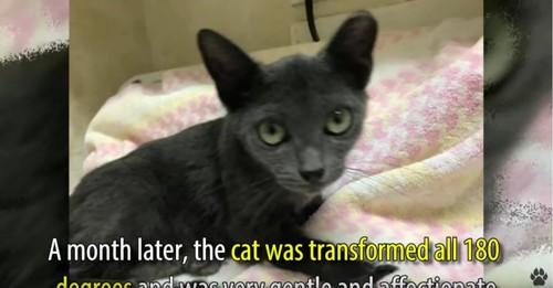 猫とピンクの毛布