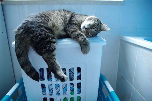 洗濯かごと猫