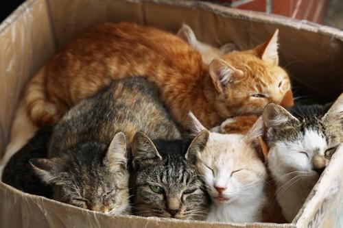 段ボール箱で眠る野良猫たち