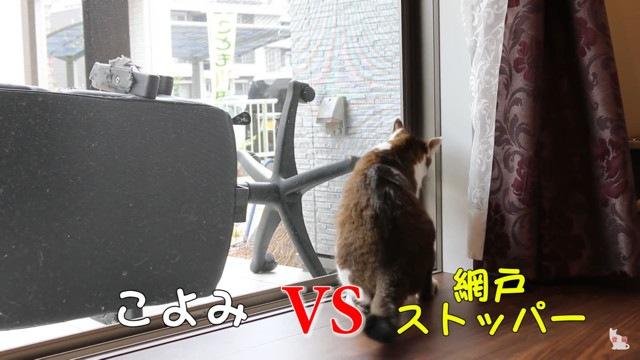 開けようとする猫